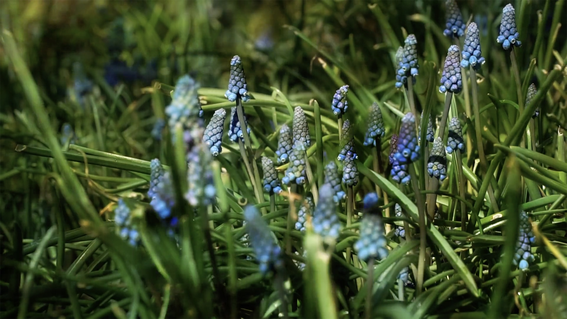 Blue flowers emerge from green foliage